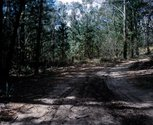 Catherine Laudenbach, please be careful:Belango State Forest (Road). Digital print.