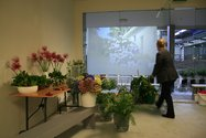 Suburban Floral Association's Shopfront at Letting Space