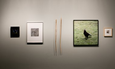 g. bridle, The Inimical: A Selection from the Retreat 2011. Project 1 of in camera: a project series around and about collecting. Adam Art Gallery, Victoria University of Wellington. Photography: Robert Cross.