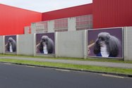 JahJahSphinx, CDJ, a Te Tuhi billboard project on Reeves Road
