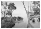 Wayne Barrar, From lakeside cordyline, Lake Wairarapa, New Zealand 2011