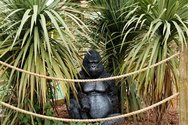 Wayne Barrar, Gorilla fringed in cordyline, crazy golf course, Torquay, England  2011