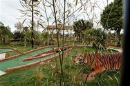 Wayne Barrar, Tiger in tropical themed cordyline, crazy golf course, Torquay, England  2011