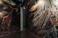 Jae Hoon Lee, Root, 2011, digital print and sound installation