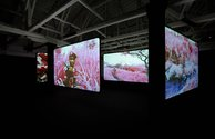 Inside the Irish Pavilion featuring the work of Richard Mosse.