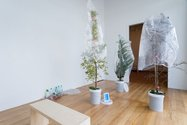 Anthony Cribb, Totara Heights, potted plants, pamphlets, model