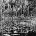 C. Brian Smith, Lake Mahinapua, June 2006/2013, Selenium toned gelatin silver print on Agfa Brovira.