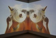 Nathan Pohio, The Feral Horses of Natasha von Braun, 2015, double channel HD projection, 5min 20sec. Photo: Daegen Wells
