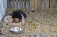 Kalisolaite 'Uhila, Pigs in the yard, 2011, documentation of one week performance, Performance Arcade, Auckland